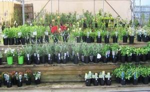 Wide range of plants