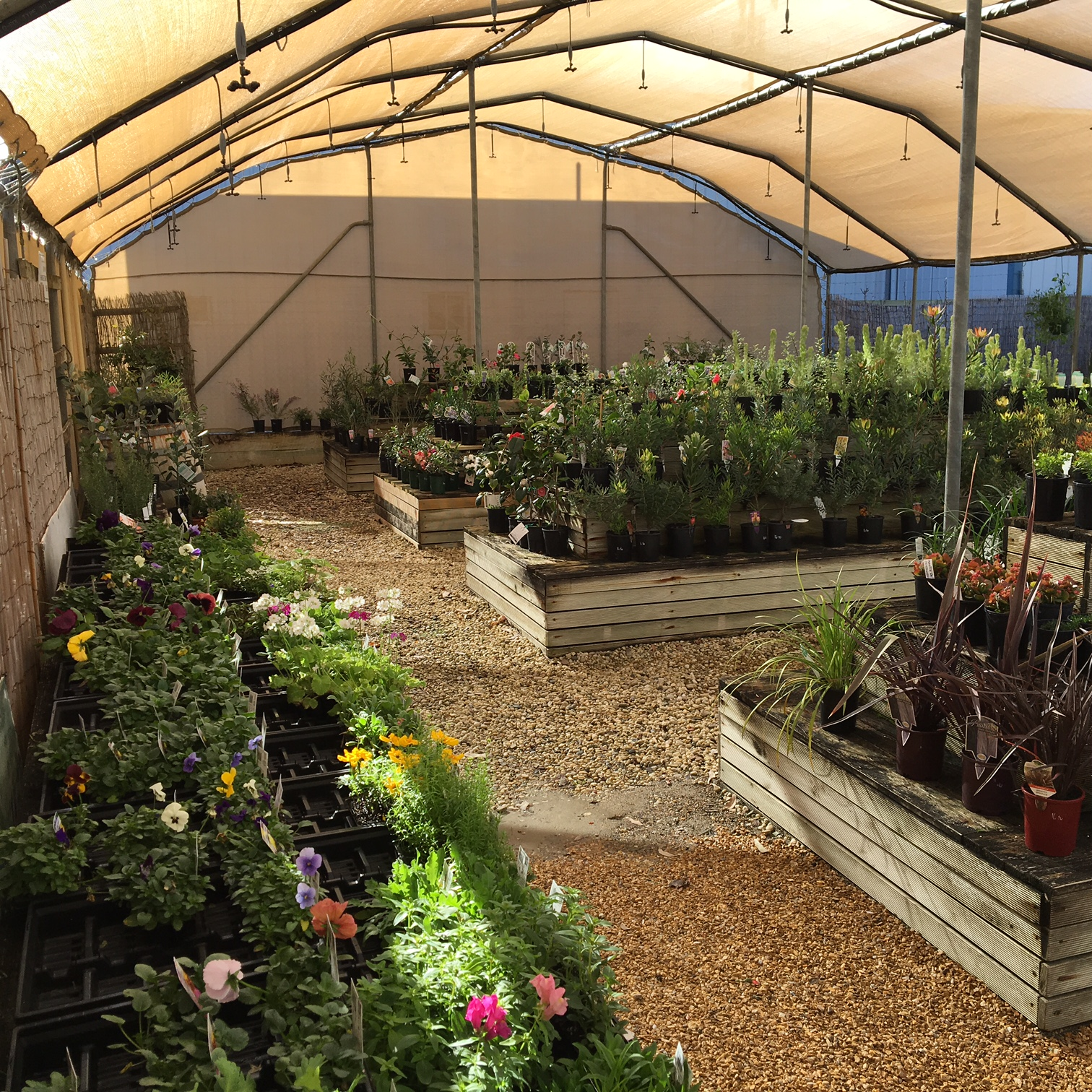 Wide range of plants and seedlings